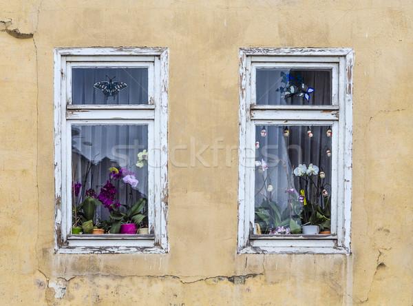 Stockfoto: Venster · orchidee · bloem · decoratie · binnenkant · oude