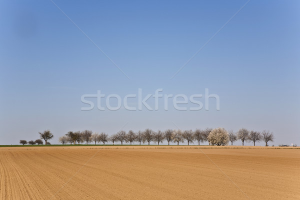 freshly ploughed acre with row of trees Stock photo © meinzahn