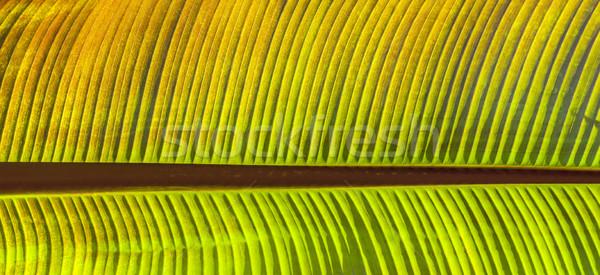 palm tree in the garden Stock photo © meinzahn