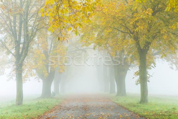 аллеи тумана деревья осень красочный лес Сток-фото © meinzahn