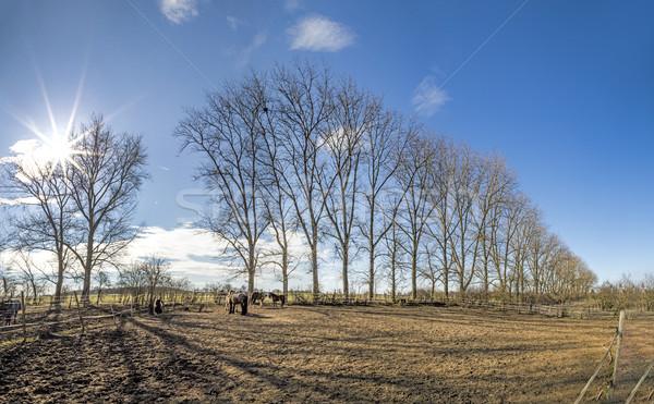 outdoor paddock with horses Stock photo © meinzahn