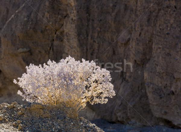 Desierto muerte valle espectacular luz Foto stock © meinzahn
