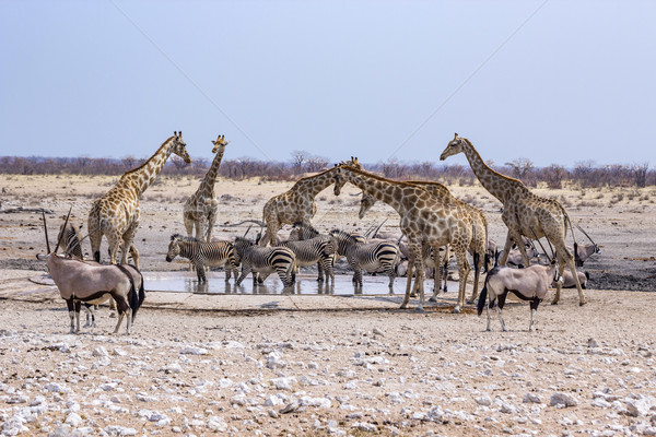 воды дыра трава природы животные Сток-фото © meinzahn