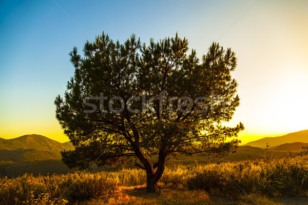 Yalnız ağaç gün batımı gökyüzü ahşap soyut Stok fotoğraf © meinzahn