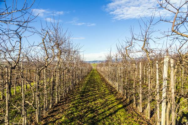 Verger de pommiers printemps paysage santé fond Photo stock © meinzahn