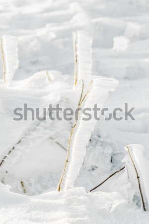 detail of snow and ice at frozen plant  at the winter mountain l Stock photo © meinzahn