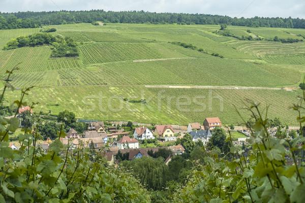Vinha paisagem região aldeia França Foto stock © meinzahn
