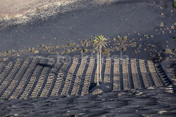 La volcanique sol célèbre mur terre Photo stock © meinzahn