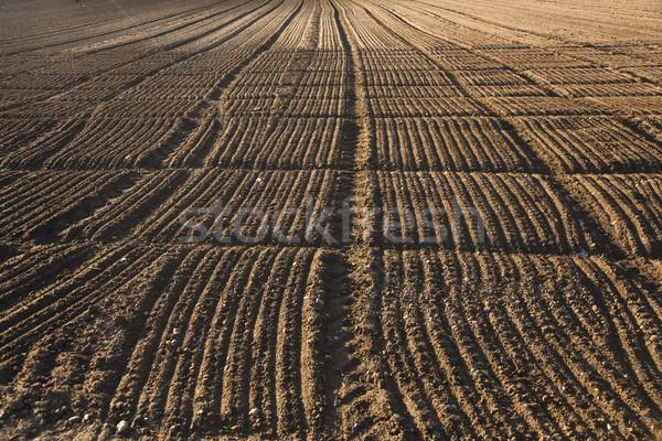 freshly plowed acre in beautiful light Stock photo © meinzahn