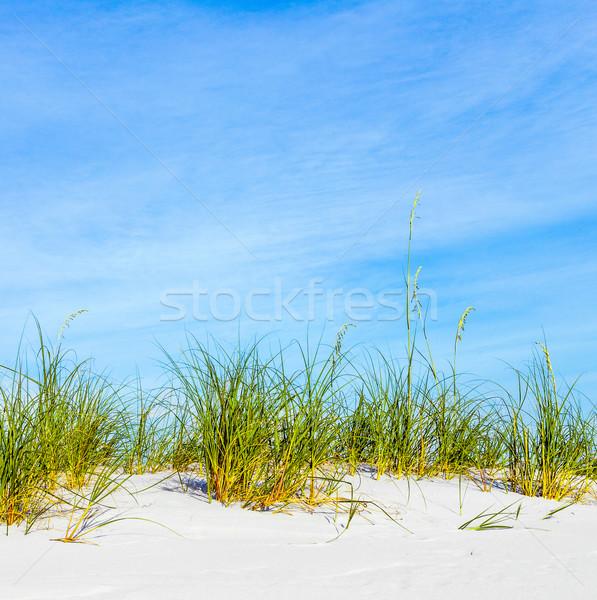 grass grows at dune at a beautiful beach Stock photo © meinzahn