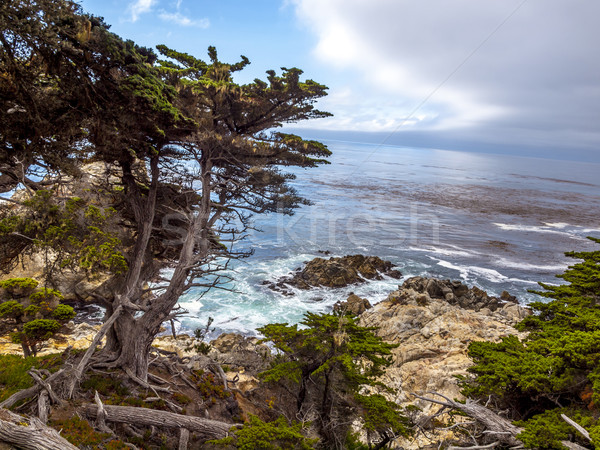 View of rocky cliffs above the Pacific Ocean at Point Lobos Stat Stock photo © meinzahn