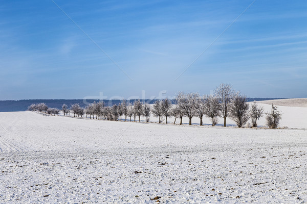 white icy trees in snow covered landscape Stock photo © meinzahn