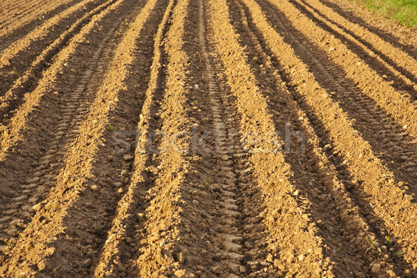 Background of newly plowed field  Stock photo © meinzahn