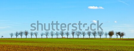 freshly ploughed acre with row of trees at the horizon  Stock photo © meinzahn