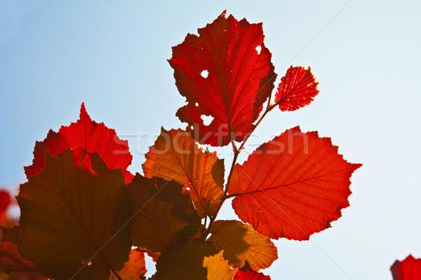 草 素晴らしい 午前 光 葉 ツリー ストックフォト © meinzahn