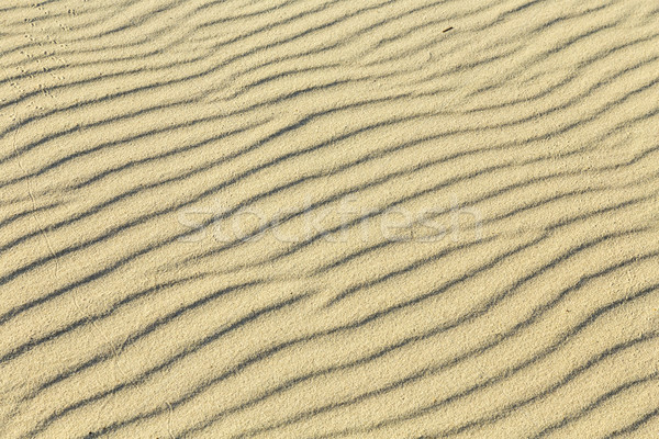 Oiseau sable plage texture nature mer Photo stock © meinzahn