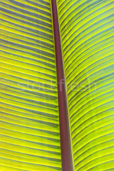 detail of palm tree  Stock photo © meinzahn