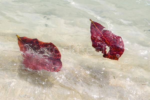 Folhas natação oceano estrutura arenoso Foto stock © meinzahn