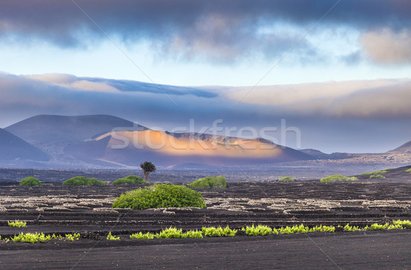 extinguished volcanoes in Timanfaya National Park Stock photo © meinzahn