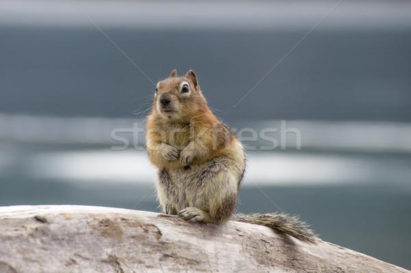 áll hát lábak fa Stock fotó © meinzahn