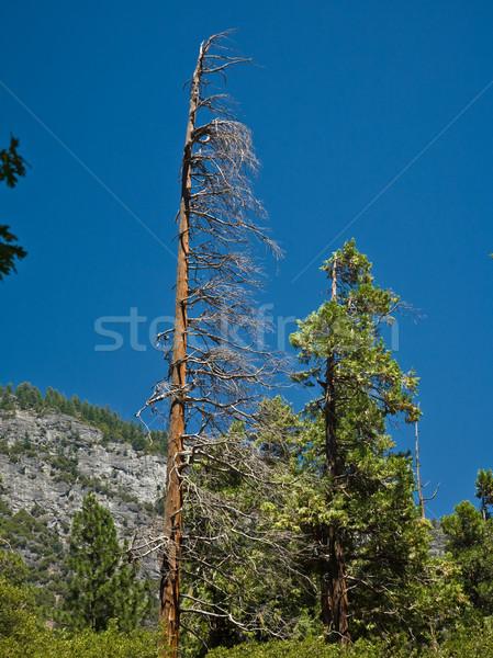 Muertos árboles incendios forestales yosemite parque cielo Foto stock © meinzahn