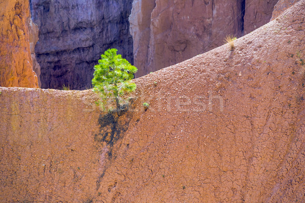 Güzel manzara kanyon taş oluşum Stok fotoğraf © meinzahn