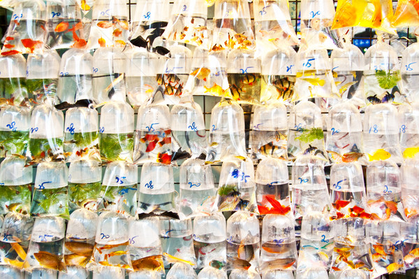 colorful tropical fishes in plastic bagy for sale Stock photo © meinzahn