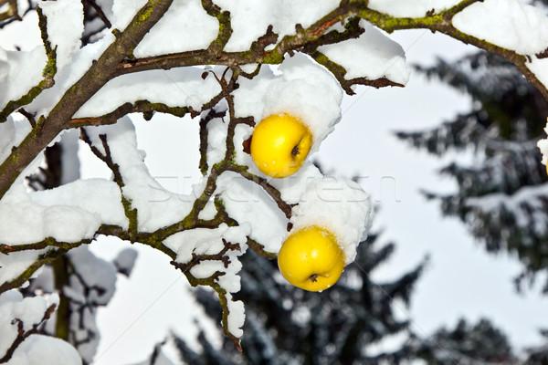リンゴ 絞首刑 支店 カバー 最初 ストックフォト © meinzahn