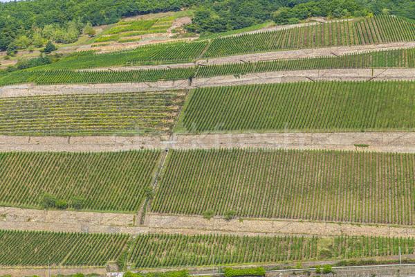beautiful vineyards at  the rhine valley in Ruedesheim Stock photo © meinzahn