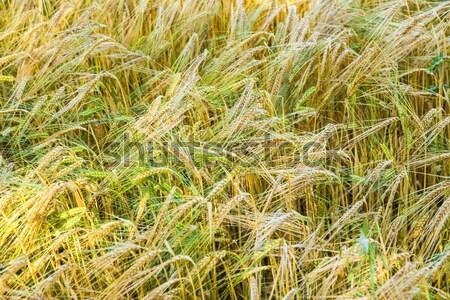 Arany részlet harmonikus minta textúra absztrakt Stock fotó © meinzahn