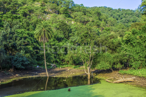forest landscape with lake in Sariska national park Stock photo © meinzahn