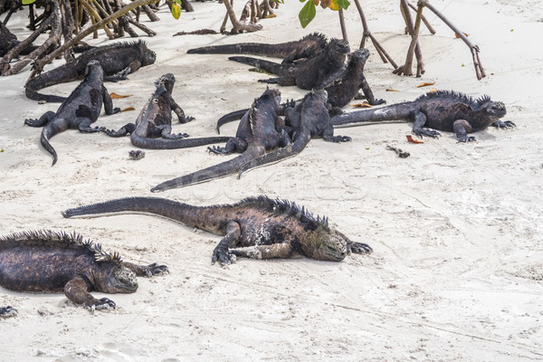 sea lizard on a rock at the beach Stock photo © meinzahn
