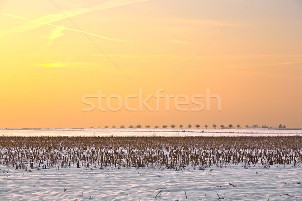landscape with snow covered fields in wintertime Stock photo © meinzahn