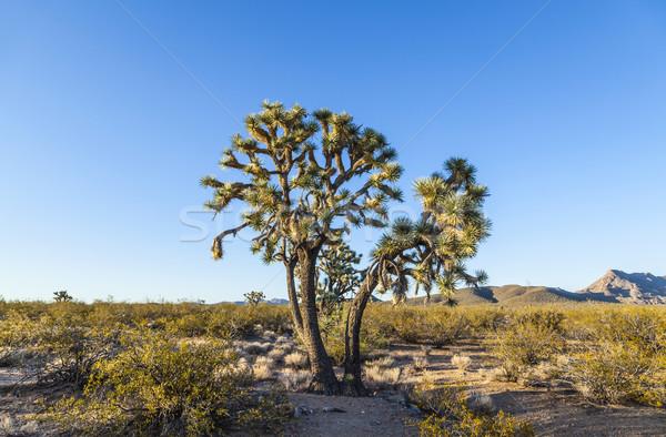 Ağaç sıcak parlak ışık doğa manzara Stok fotoğraf © meinzahn