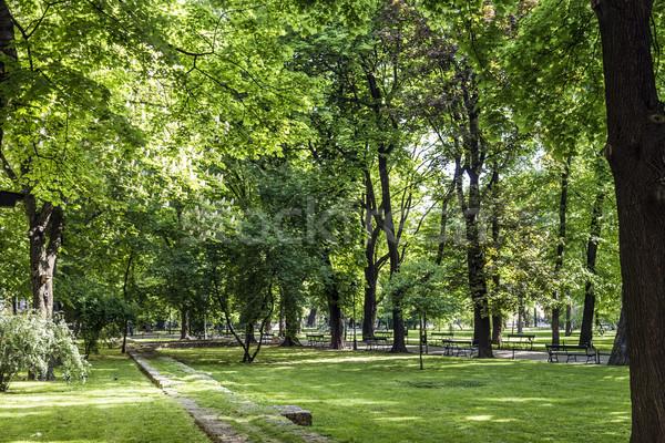 Cracovia Polonia verde árboles árbol ciudad Foto stock © meinzahn