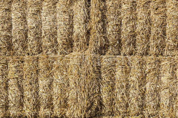 тюк соломы гармонический структуры продовольствие солнце Сток-фото © meinzahn