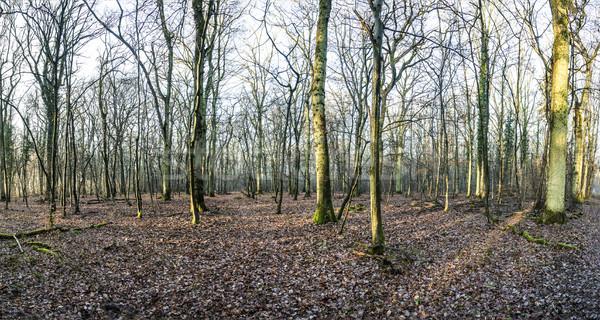 Manzaralı meşe orman güneş kış zaman Stok fotoğraf © meinzahn