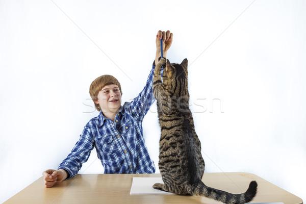 Foto stock: Inteligente · menino · aprendizagem · escolas · quebrar · gato
