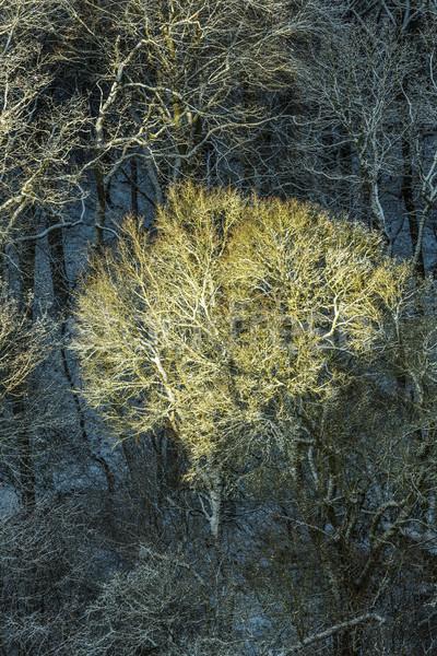 Zonlicht ijzig bladeren antenne Stockfoto © meinzahn