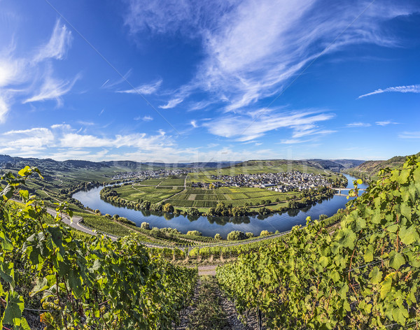 Noto fiume cappio cielo albero vino Foto d'archivio © meinzahn