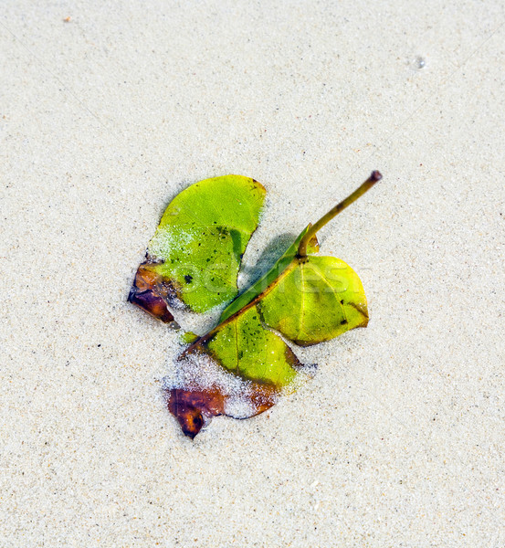 beautiful structured leaves at the beach arranged by nature  Stock photo © meinzahn