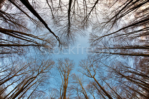 Taç ağaçlar mavi gökyüzü harmonik şube yapı Stok fotoğraf © meinzahn