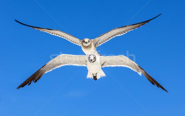 Möwe blauer Himmel Ozean Natur Hintergrund Schönheit Stock foto © meinzahn