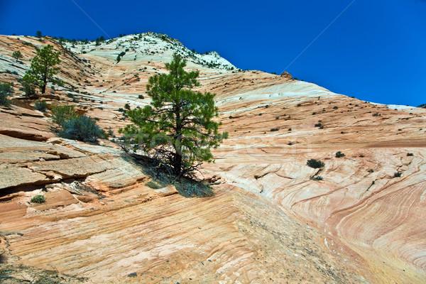 wonderful landscape around Mt. Carmel, Zion National Parc Stock photo © meinzahn