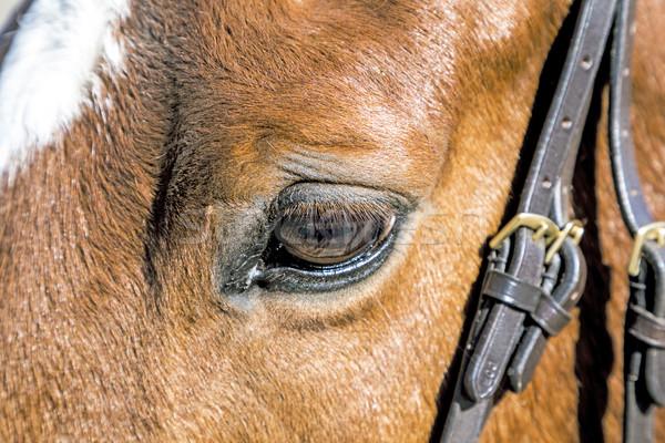 detail of brown horse eye  Stock photo © meinzahn