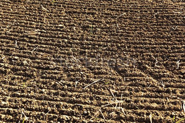 fresh ploghed fields in beautiful light Stock photo © meinzahn