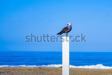 seagul sitting on a trunk for volleyball at the beach and watche Stock photo © meinzahn