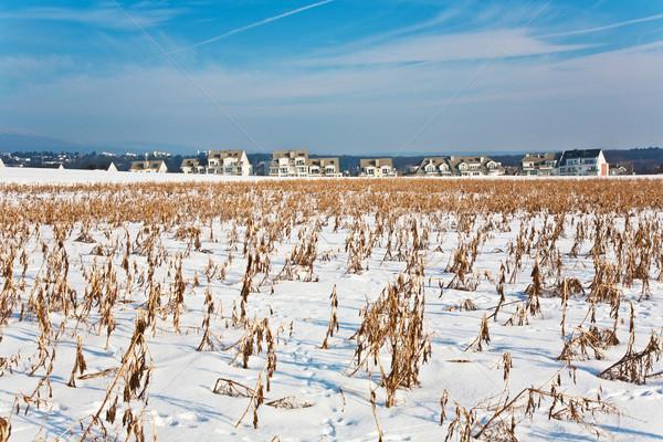 Hermosa paisaje invierno nieve viviendas maíz Foto stock © meinzahn