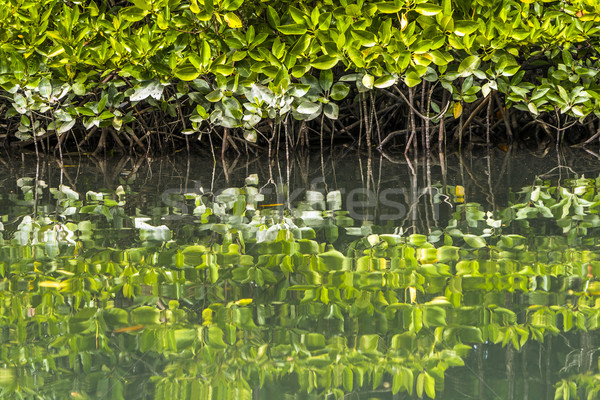 Beautiful mangrove plantations on the sea with roots showing  Stock photo © meinzahn