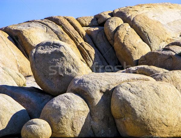 joshua tree with rocks in Joshua tree national park   Stock photo © meinzahn